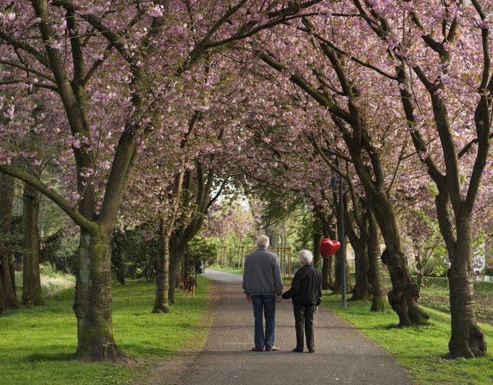 Kirschblte mit Seniorenpaar